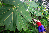 A visitor (mr) admires a large leaf at the La Paz Waterfall Gardens and Peace Lodge, Costa Rica