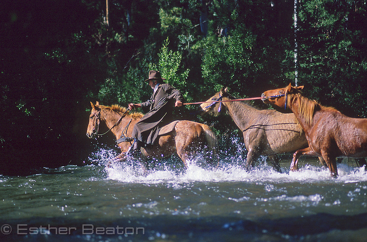 Mountain Cattlemen leading horses through alpine stream. Snowy Mountains, Victoria