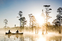 Two men paddle in a canoe at sunrise in a beautiful cypres swamp at Cheraw State park in South Caroliona.