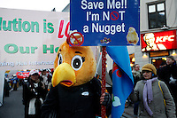 Participant dressed as chicken outside KFC during at a big demonstration held in Copehangen on Dec 12. United Nations Climate Change Conference (COP15) was held at Bella Center in Copenhagen from the 7th to the 18th of December, 2009. A great deal of groups tried to voice their opinion and promote their cause in various ways. The conference and demonstrations was covered by thousands of photographers and journalists from all over the world...©Fredrik Naumann/Felix Features.