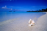 Seashell on a pristine white sand beach.