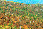 Sky Line Drive Autumn forest trees with brilliant color Red orange yellow green  leaves Commonwealth of Virginia,