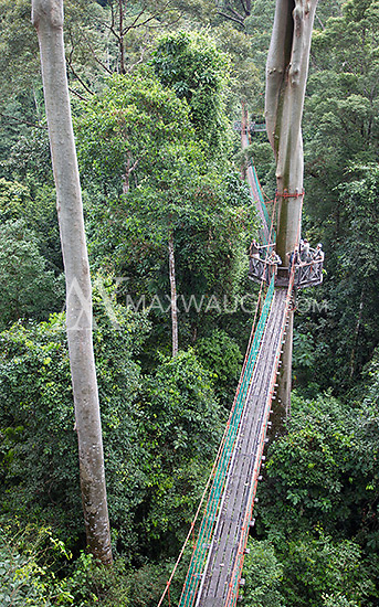 The canopy walkway at the Borneo Rainforest Lodge