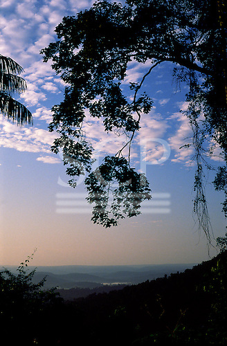 Para State, Brazil. Misty rainforest at dawn with trees in silhouette in the foreground; Serra dos Carajas.