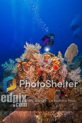 26 July 2015: SCUBA Diver Sally Herschorn explores a coral formation near Ghost Mountain, on the North side of Grand Cayman Island. Located in the British West Indies in the Caribbean, the Cayman Islands are renowned for excellent scuba diving, snorkeling, beaches and banking.  Mandatory Credit: Ed Wolfstein Photo *** RAW (NEF) Image File Available ***