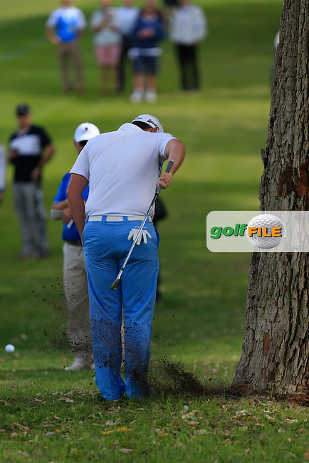 Jamie McLeary (SCO) tee-shot landed beside the bottom of a tree so he decides to hit it back handed during Round 3 of the ISPS HANDA Perth International at the Lake Karrinyup Country Club on Saturday 25th October 2014.<br /> Picture:  Thos Caffrey / www.golffile.ie