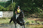 Horses At Devon Horse Show