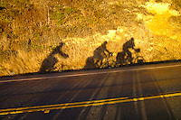 Touring Cyclists cast a shadow on Highway 1 near Big Sur - California