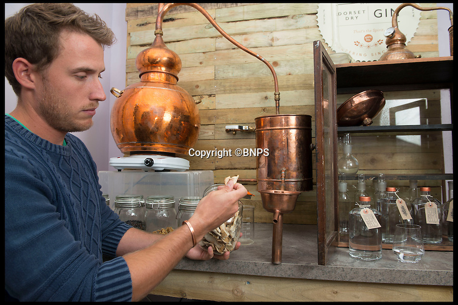 BNPS.co.uk (01202 558833)<br /> Pic: LauraDale/BNPS<br /> <br /> Rupert Holloway in his distillery, set up in his home's study.<br /> <br /> A canny entrepreneur has launched Britain's smallest commercial gin distillery - after setting it up in the confines of his own kitchen.<br /> <br /> Rupert Holloway packed in his high-flying job as a chartered surveyor to start producing the trendy spirit one bottle at a time at his home in Christchurch, Dorset.<br /> <br /> His miniature distillery is the first ever to open in the county - and his unique recipe uses botanicals found in the hedgerows, forests and coastline of the county.<br /> <br /> He experimented with 37 recipes before settling on one made with gorse flowers and elderberriers hand-picked from the New Forest, and samphire, a sea vegetable, from the sea shore.<br /> <br /> The gin, called Conker Spirit, will be launched in time for Christmas and it is expected to sell for £30 a bottle.