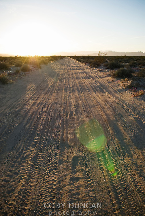 Sandy dirt road through desert of northern Baja California, Mexico