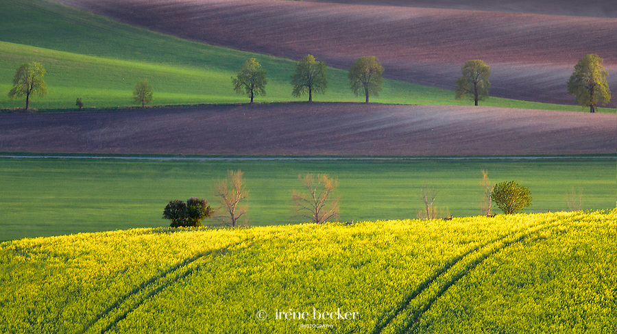 Dream  Land<br />