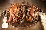 MEXICO, Baja, Magdalena Bay, Pacific Ocean, fresh longosta caught in Magdalena Bay