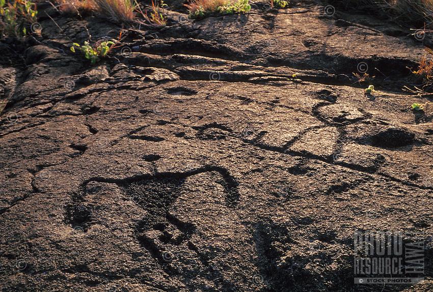 Petroglyphs carved on Pahoehoe lava, Puu lua, Hawaii Volcanoes National Park,  near sunset.