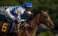 SARATOGA SPRINGS, NY- AUGUST 04: Mucho with Jose Ortiz breaks his maiden at Saratoga Racecourse on August 4, 2018 in Saratoga Springs, New York.(Photo by Alex Evers/Eclipse Sportswire)