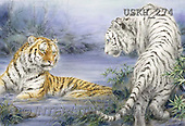 Kayomi, REALISTIC ANIMALS, REALISTISCHE TIERE, ANIMALES REALISTICOS, paintings+++++,USKH274,#A#