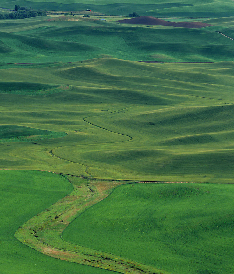 The green hills show new growth in the Palouse of Eastern Washington State.