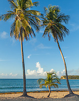 Vieques, Puerto Rico: Morning sun on beach and palm trees at Sun Bay