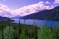 Boreal Forest at Muncho Lake, Muncho Lake Provincial Park, Canadian Northern Rockies, Northern BC, British Columbia, Canada, Summer