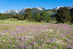 wildflowers, Mummy Range, blue sky, summer, morning, Horseshoe Park, Rocky Mountain National Park, Colorado, USA