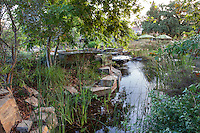 Pond, Los Angeles Natural History Museum, outdoor habitat garden