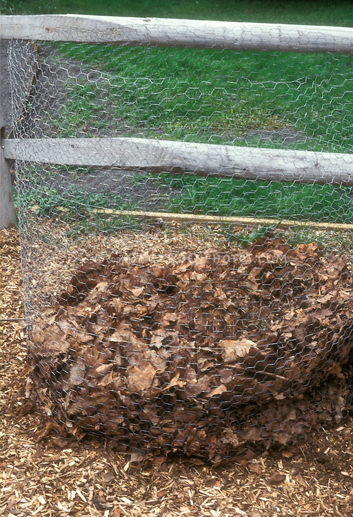 Compost bin made of a circle of wire mesh, to compost fallen leaves