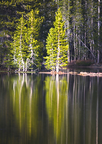PINE TREES ARE REFLECTED IN A POND AT YOSEMITE NATIONAL PARK,CALIFORNIA