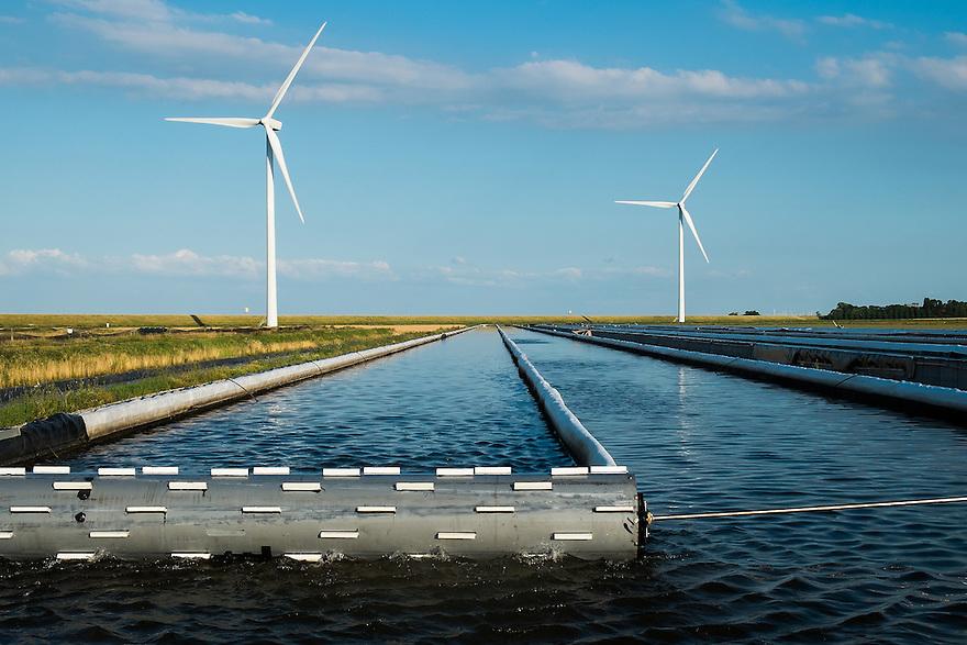 Nederland, Colijnsplaat, 2 aug 2013<br /> Delta Farms, kwekerij voor zagers, een soort waterworm waar visvoer van wordt gemaakt.  <br />  <br /> Foto(c): Michiel Wijnbergh