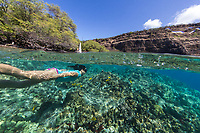 A woman snorkels with yellow tang fish along the reef near the Captain Cook monument, Kealakekua Bay, Big Island.