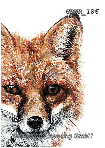 Simon, REALISTIC ANIMALS, REALISTISCHE TIERE, ANIMALES REALISTICOS, innovative, paintings+++++OliviaDeRivaz_Fox,GBWR186,#a#, EVERYDAY