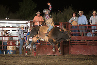 SEBRA - Fishersville, VA - 8.7.2014 - Bulls & Action