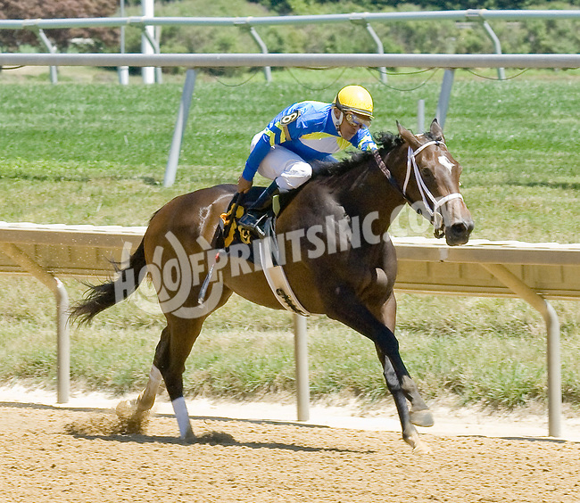 Papa's Forest winning at Delaware Park on 7/25/12