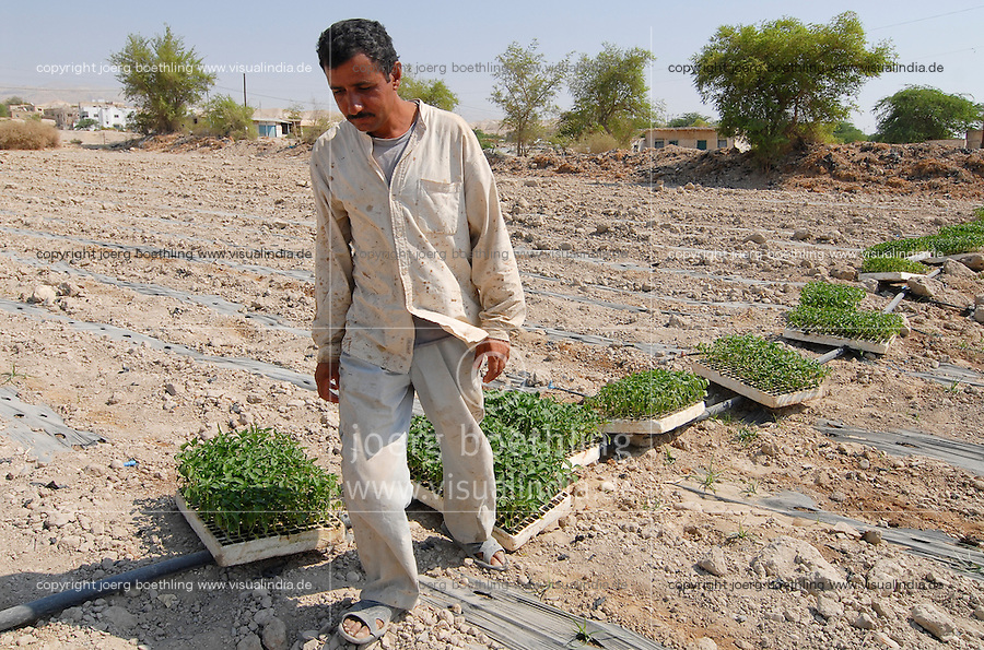 JORDANIEN Wassermangel und Landwirtschaft im Jordan Tal, Gemueseanbau / JORDAN, water shortage and agriculture in the Jordan valley , vegetable cultivation