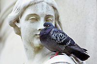 Pigeon perches on Queen Anne Statue at St Paul's Cathedral in London, England