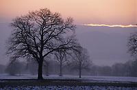 Europe/Allemagne/Forêt Noire/Env de Fribourg : Paysage rural en hiver
