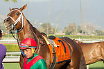 ARCADIA, CA   FEBRUARY 3 : #7 Hayabusa One, ridden by Victor Espinoza, after seeing   the result of the photo finish in the San Marcos Stakes (Grade ll) on February 3, 2018 at Santa Anita Park in Arcadia, CA.(Photo by Casey Phillips/ Eclipse Sortswire/ Getty Images)