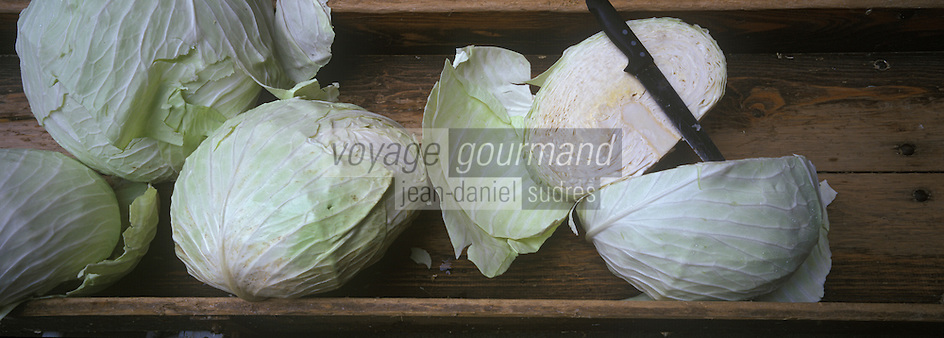 Europe/France/Alsace/67/Bas-Rhin/Krautergersheim : Chez Mr Pfleger producteur de choucroute ,dans une  choucrouterie