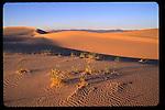Algodones Dunes at sunset