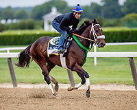 ELMONT, NY - JUNE 07: Bravazo gallops around the track as horses prepare Thursday for the 150th running of the Belmont Stakes at Belmont Park on June 7, 2018 in Elmont, New York. (Photo by Scott Serio/Eclipse Sportswire/Getty Images)