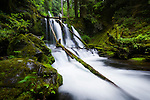 Panther Creek Falls in Washington, USA, just north of the Columbia River Gorge. This mossy paradise does not seem to see a lot of traffic, and is easily missed as there is only roadside parking and a small trail.