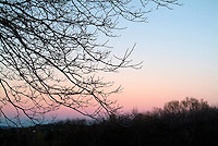 Bare branches of tree at sunset during winter, Plan-d'Aups-Sainte-Baume, Provence, France.