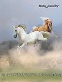 Bob, ANIMALS, horses, photos, GBLAEC1107,#A# Pferde, caballos