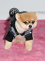 LOS ANGELES, CA - AUGUST 11: Bentley the Pom, at Beautycon Festival Los Angeles 2019 - Day 2 at Los Angeles Convention Center in Los Angeles, California on August 11, 2019. <br /> CAP/MPIFS<br /> ©MPIFS/Capital Pictures
