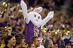 Washington Husky fan came dressed as a bunny, to cheer against San Diego State in a college football game at CenturyLink Field in Seattle, Washington on September 1, 2012  The Huskies beat the Aztecs 21-12.  © 2012. Jim Bryant Photo. All Rights Reserved.