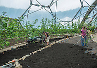 Working soil ready for planting Inside a dome at the Eden Project, St. Austell, Cornwall. The Mediterranean Biome.