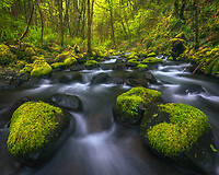 A beautiful cascade through mossy rocks and foliage.