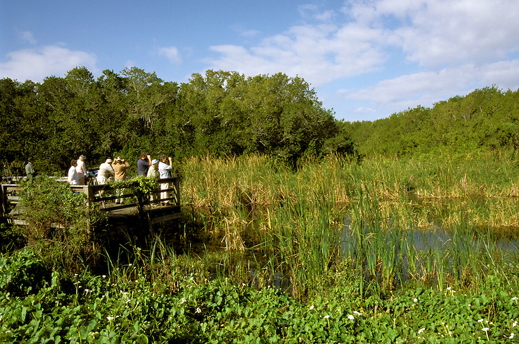 FL: Florida Everglades National Park,.Birders, birdwatching at Eco Pond..Photo Copyright: Lee Foster, lee@fostertravel.com, www.fostertravel.com, (510) 549-2202.Image: flever234