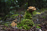 Fall in BiCentennial Park.  Mushrooms, moss  and insects,