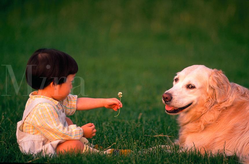 A Japanese-American toddler boy offers a clover flower to a Golden Retriever dog.
