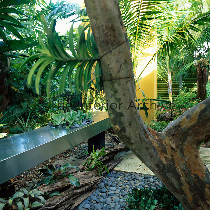 Long stainless steel table inset with a container of growing succulents  growing alongside tropical plants in a garden shaded by a large tree