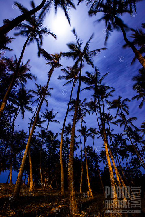 Full moon behind clouds as seen through the palm trees at Pua'ena Point, North Shore